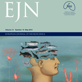 Cover of European Journal of Neuroscience, illustrated by Bonnie Gloris.